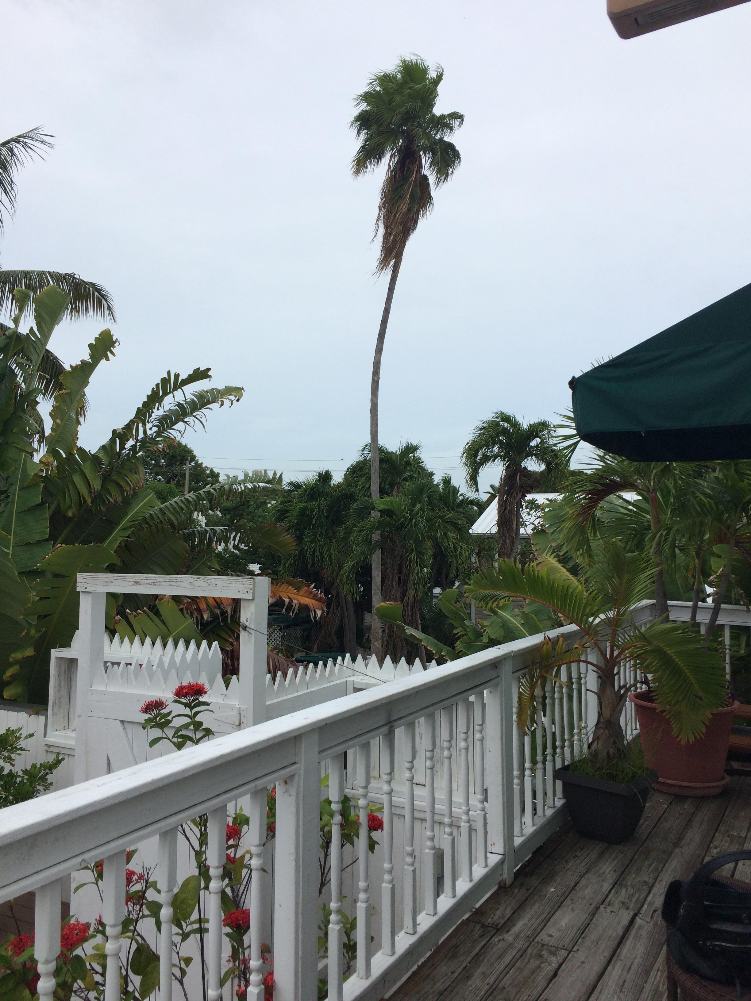 Key West High Rise