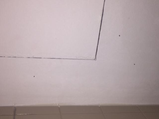 obvious stains/scuff marks at main door