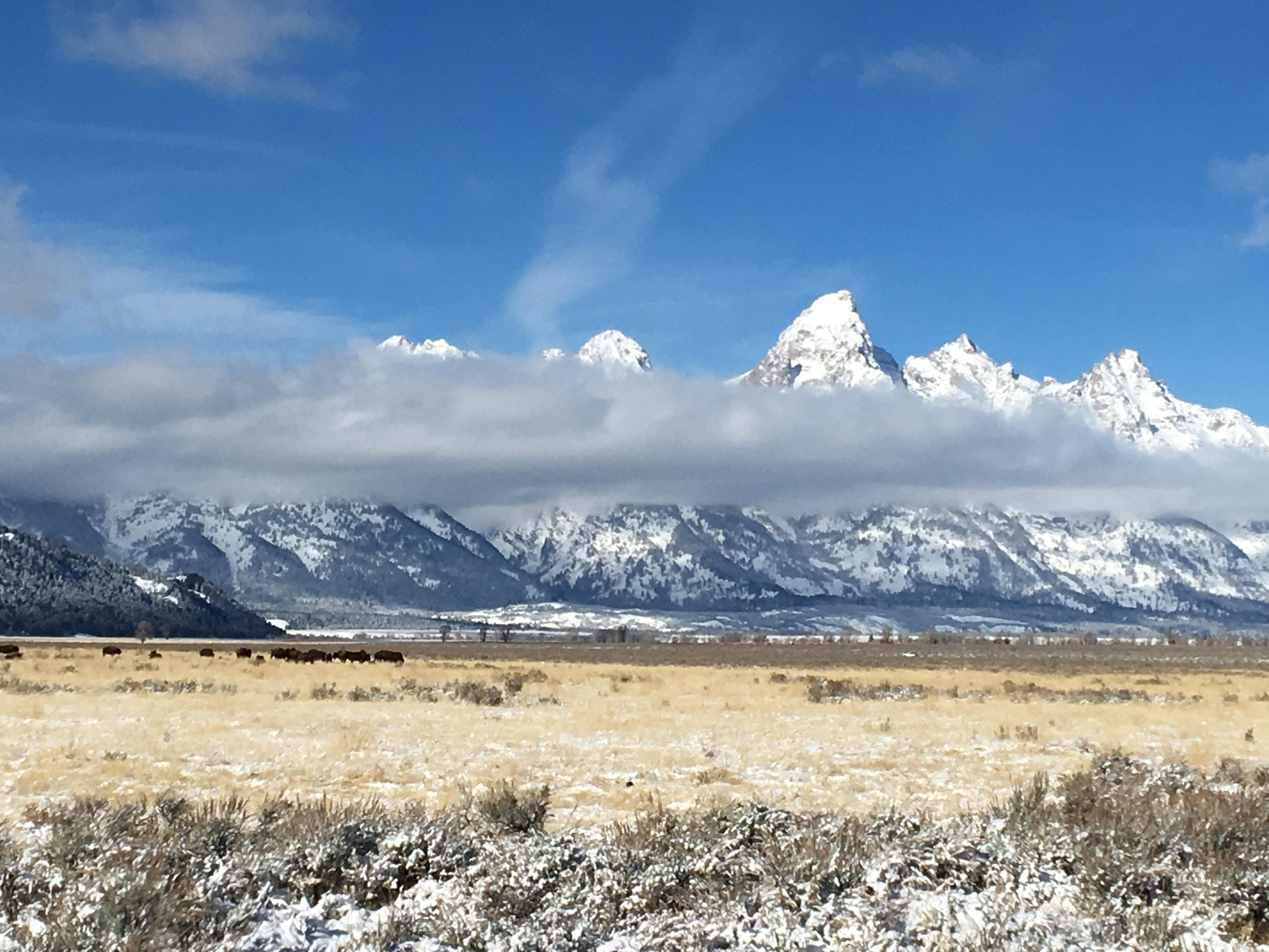 The Tetons with Bison in the foreground.