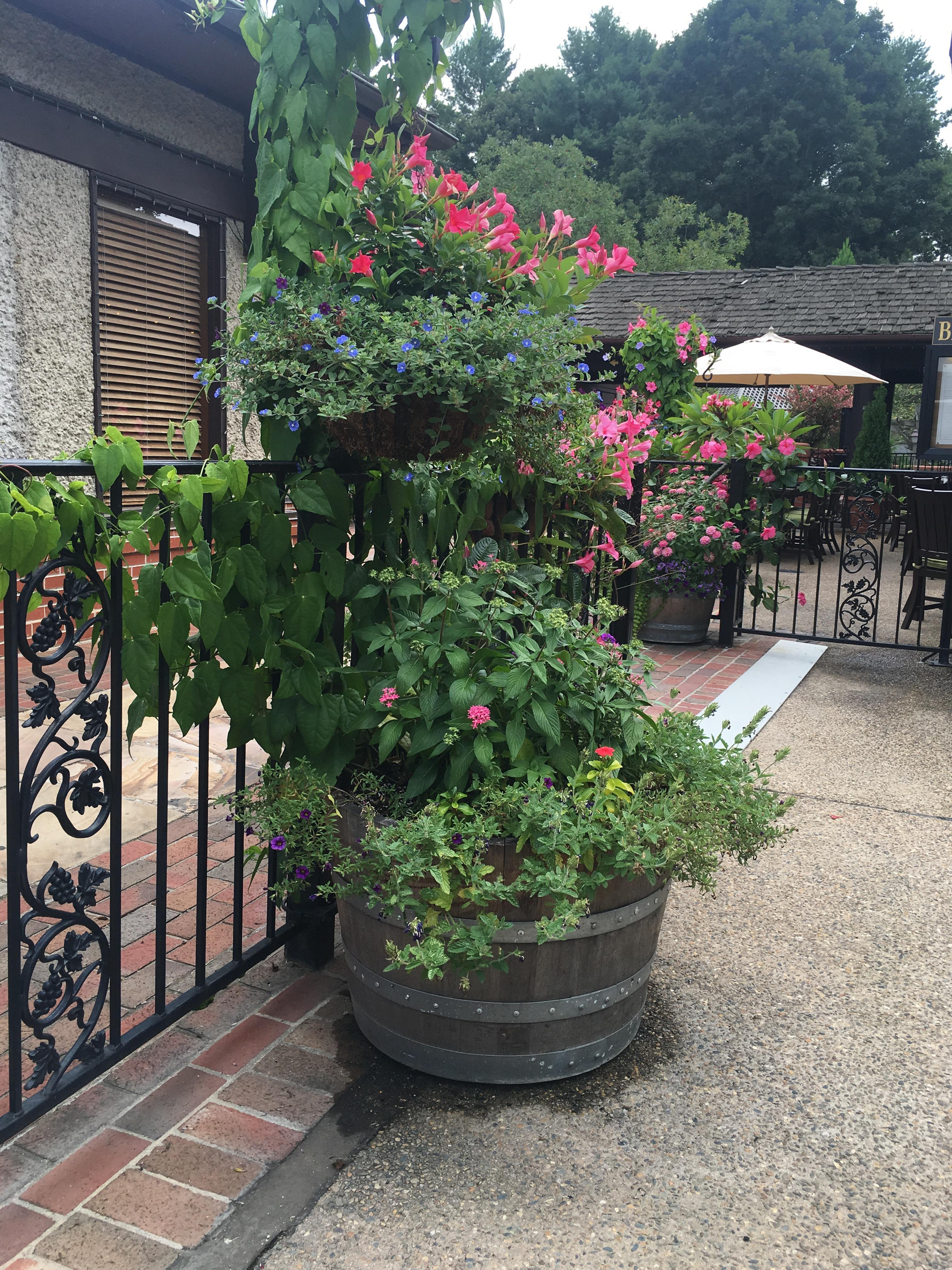village hotel on biltmore estate 2017 room prices deals reviews expedia. beautiful ideas. Home Design Ideas