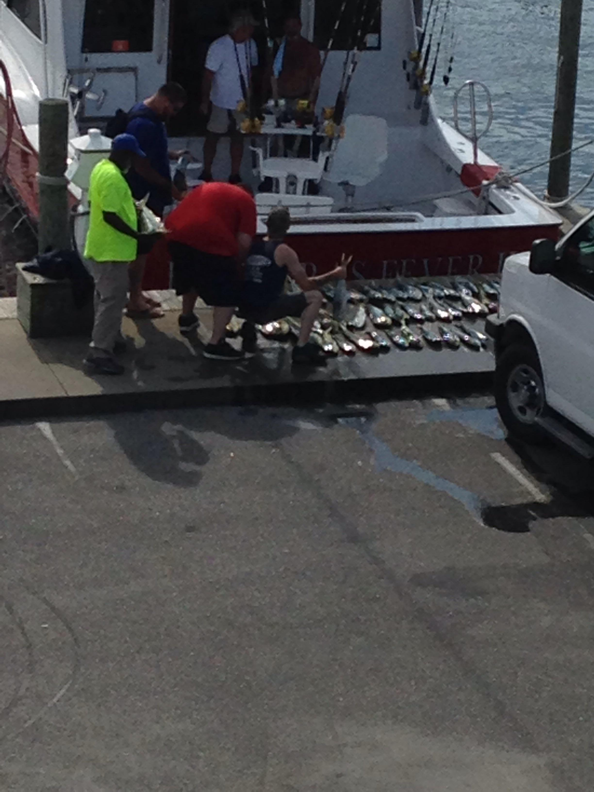 Saw the catch of the day come in