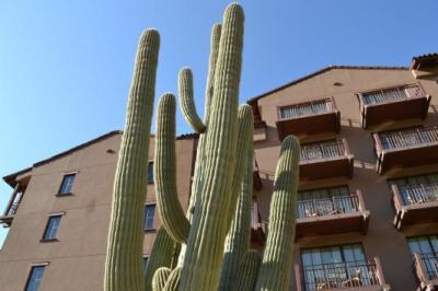Very old cactus in front of hotel.