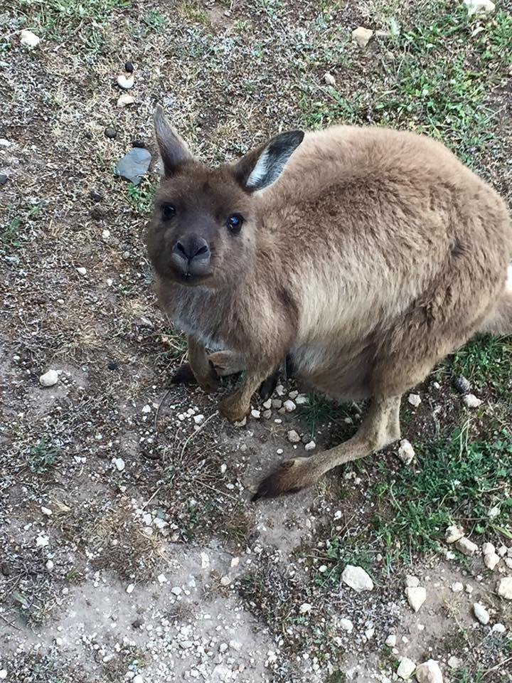 A roo right next to our cabin.