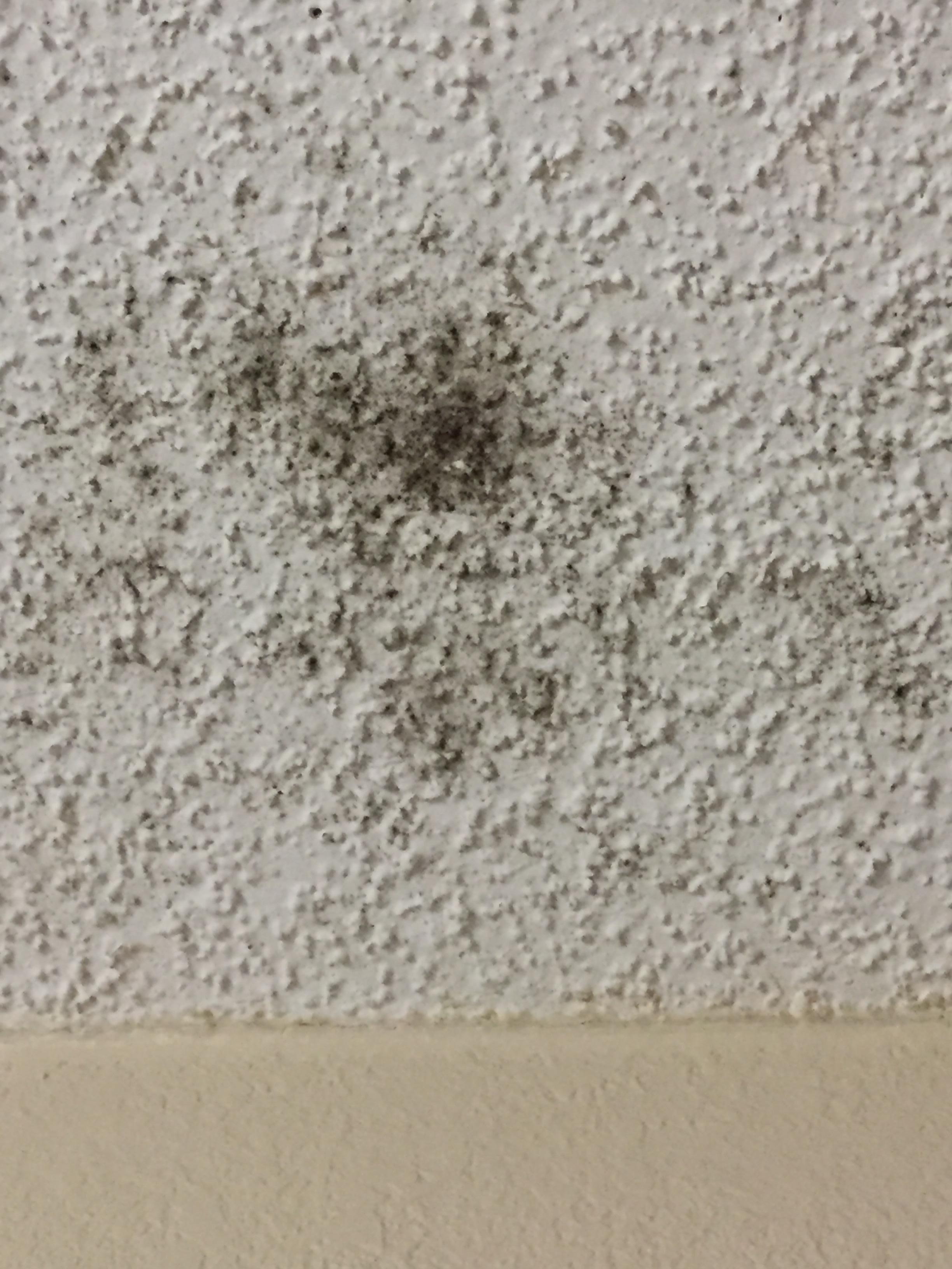 Mold or mildew on ceiling