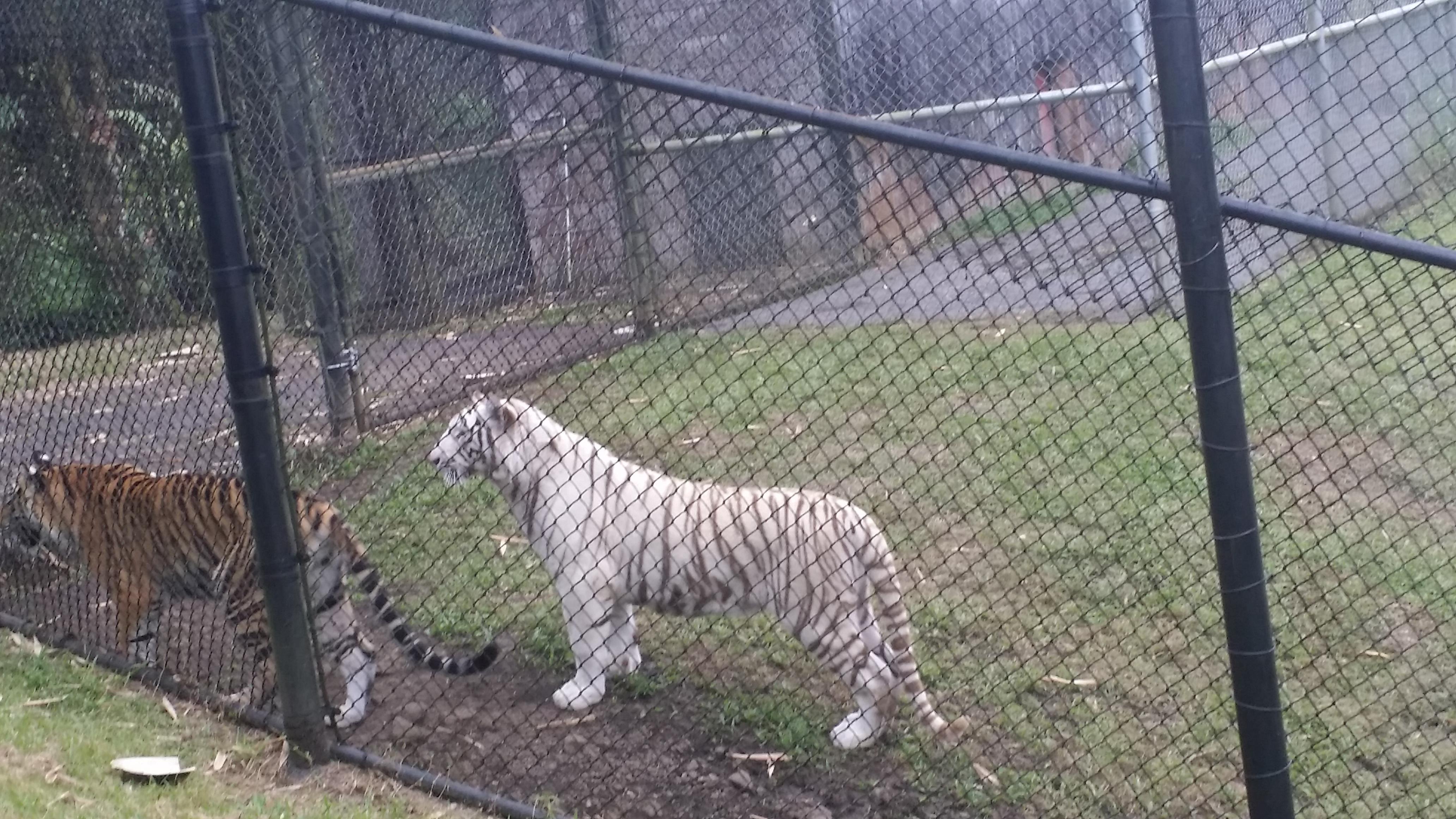 Rainforest zoo, Hilo