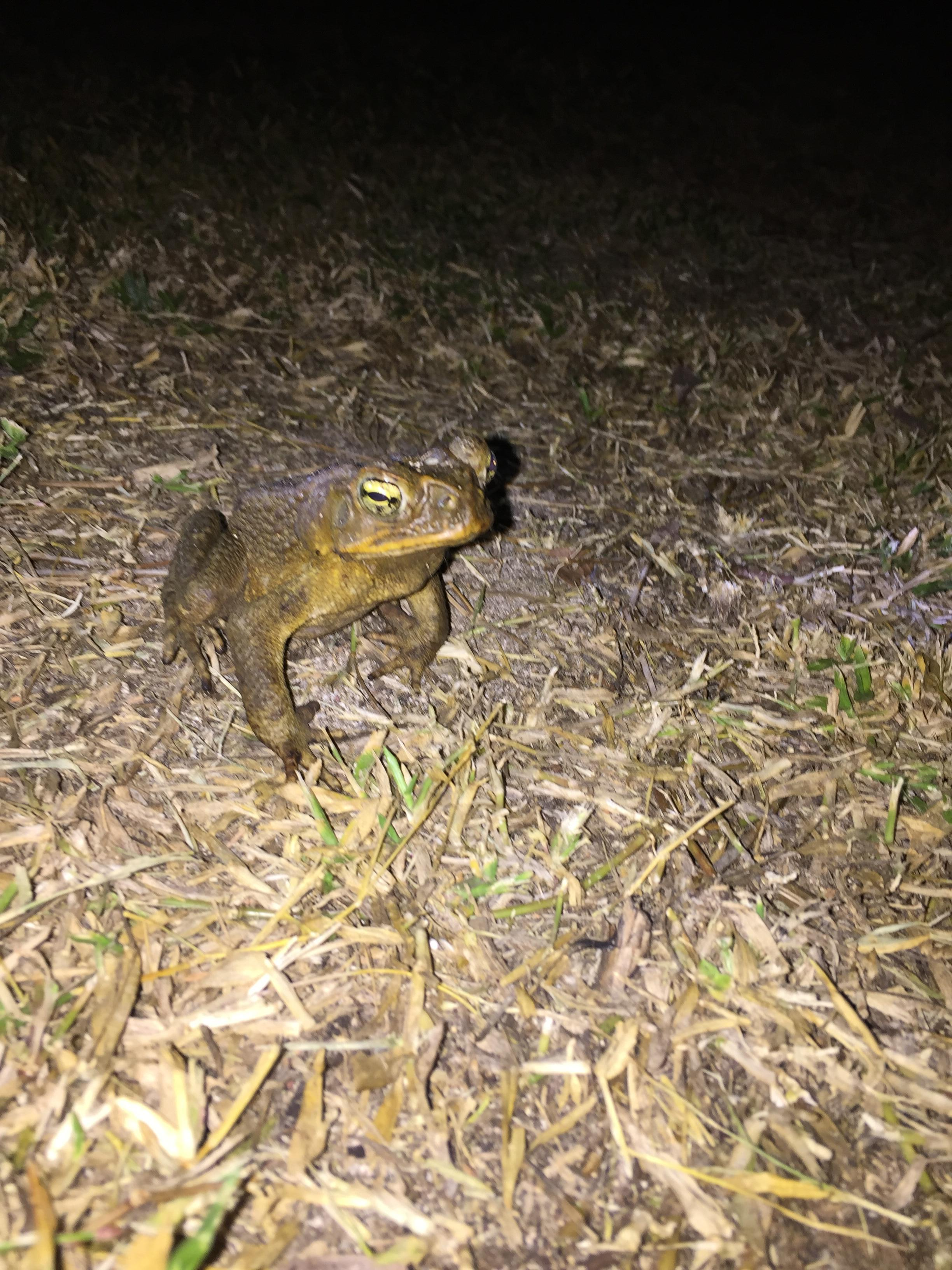 One of hundreds of night time friends