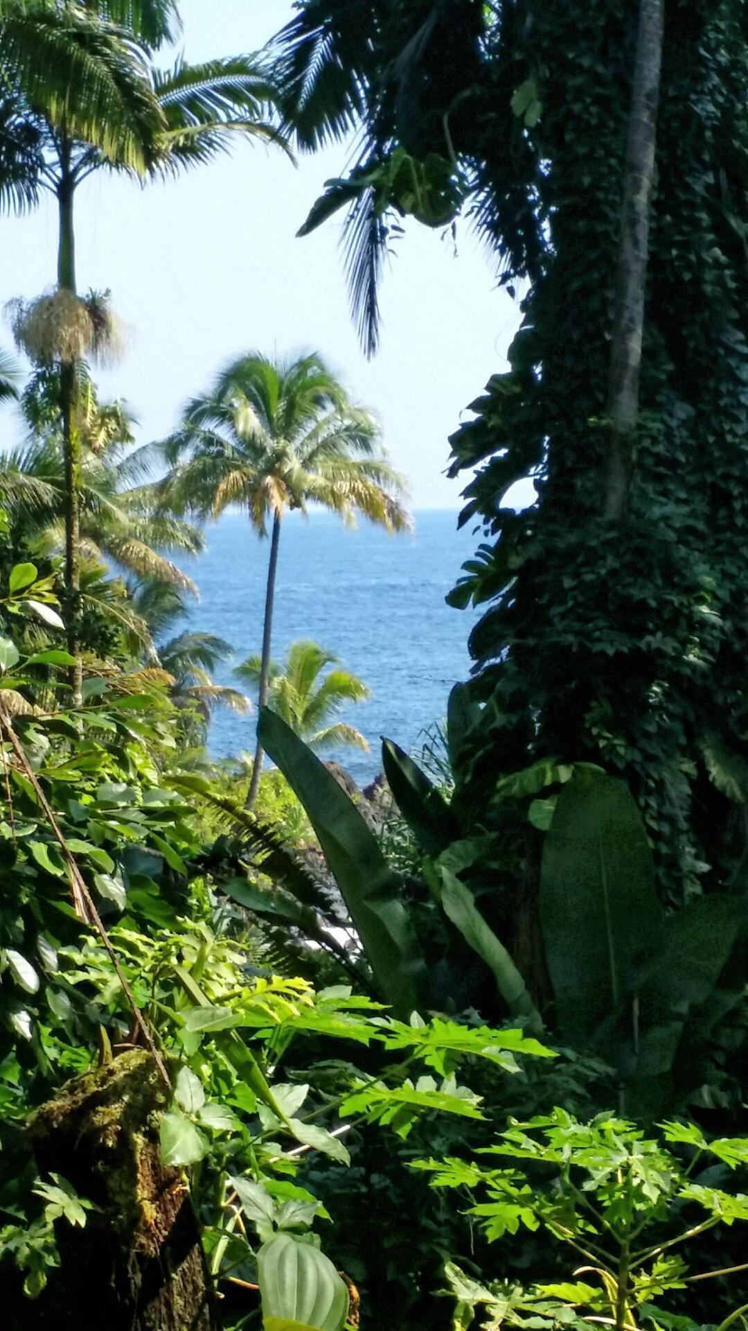 botanical gardens view, Hilo