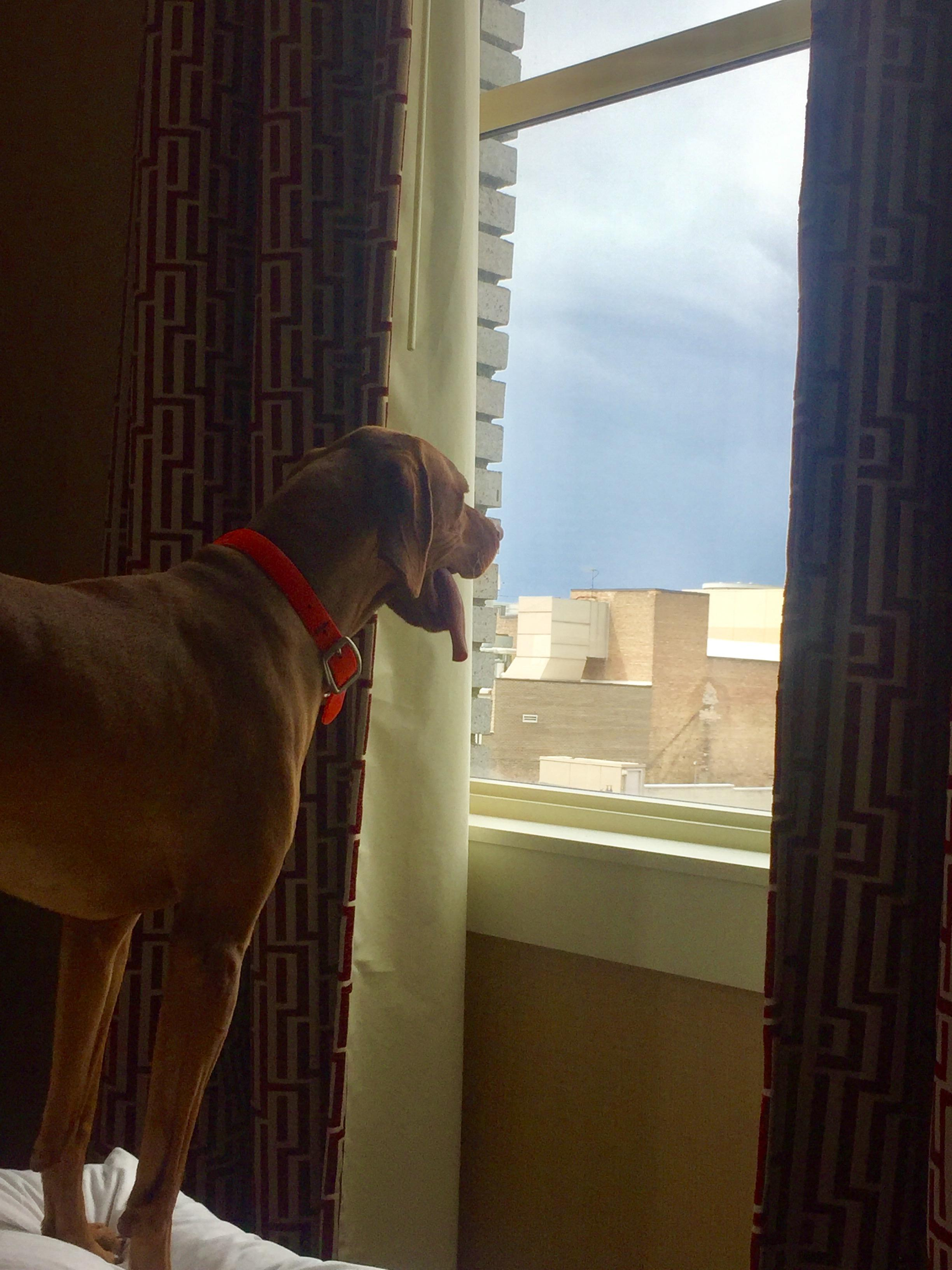 He loves the city view!