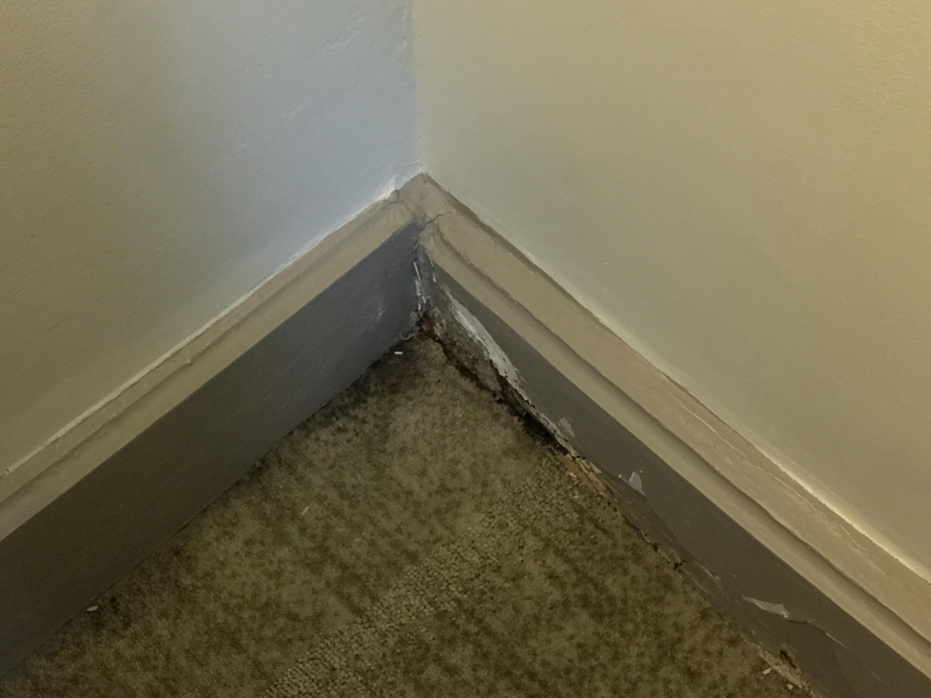 Lots of damage and mold