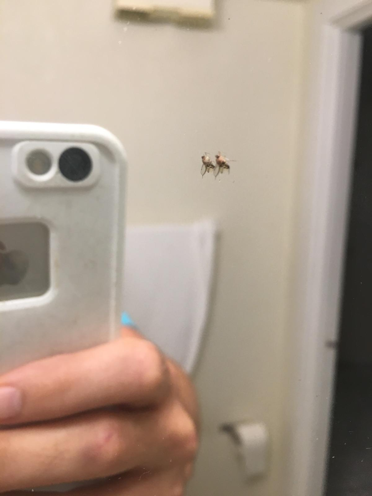 Over 60 confirmed insect kills in 2 days!