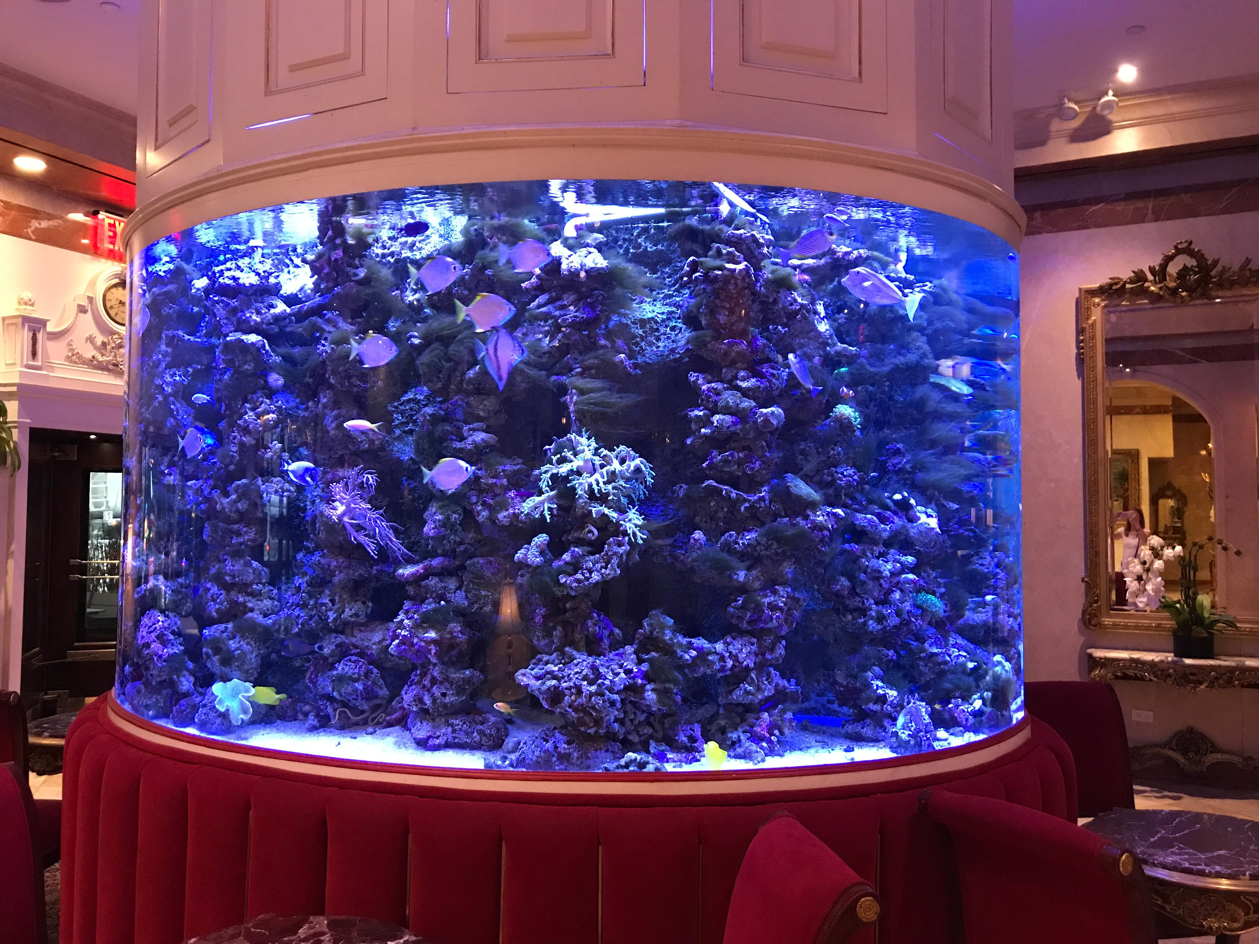 Lobby fish tank
