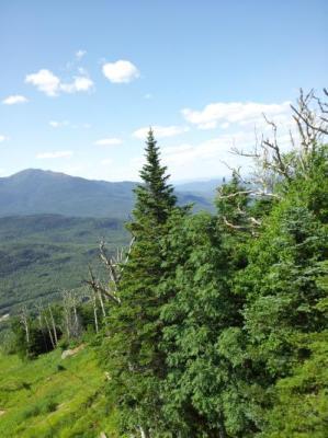 Wildcat mountain trolley