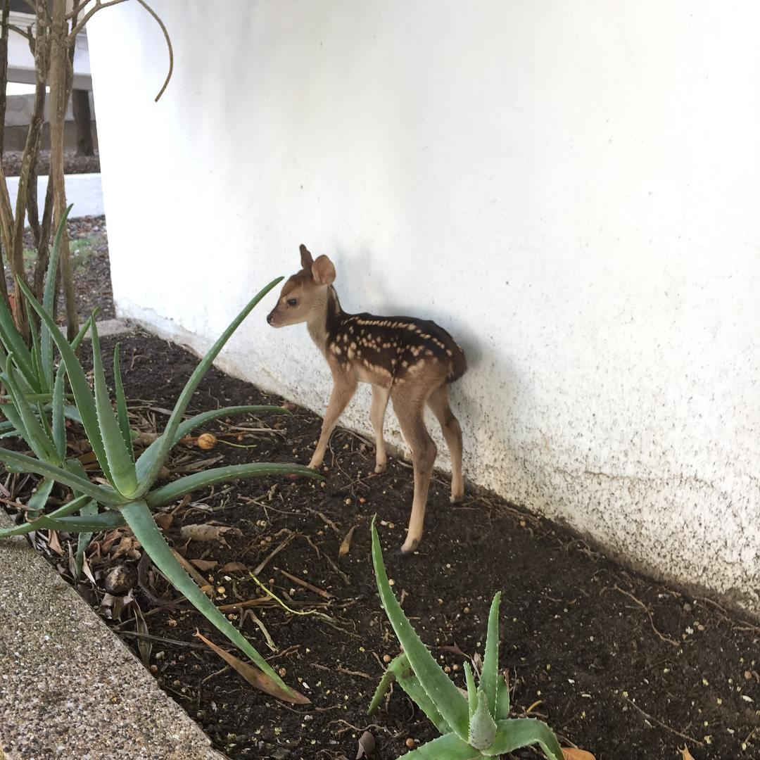 a fawn on site