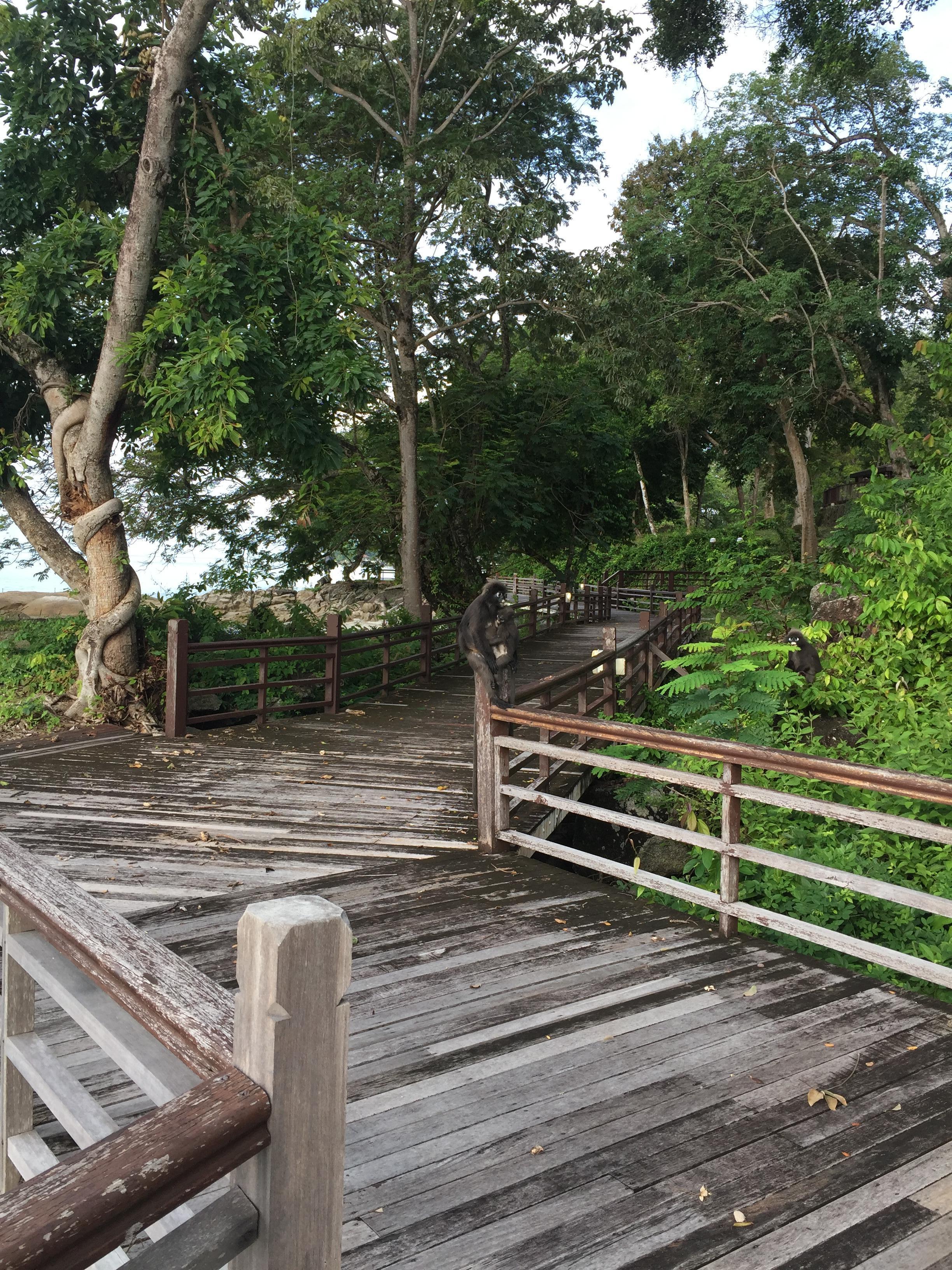 Monkeys on the boardwalk