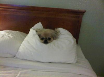 Ready For a good nights sleep !