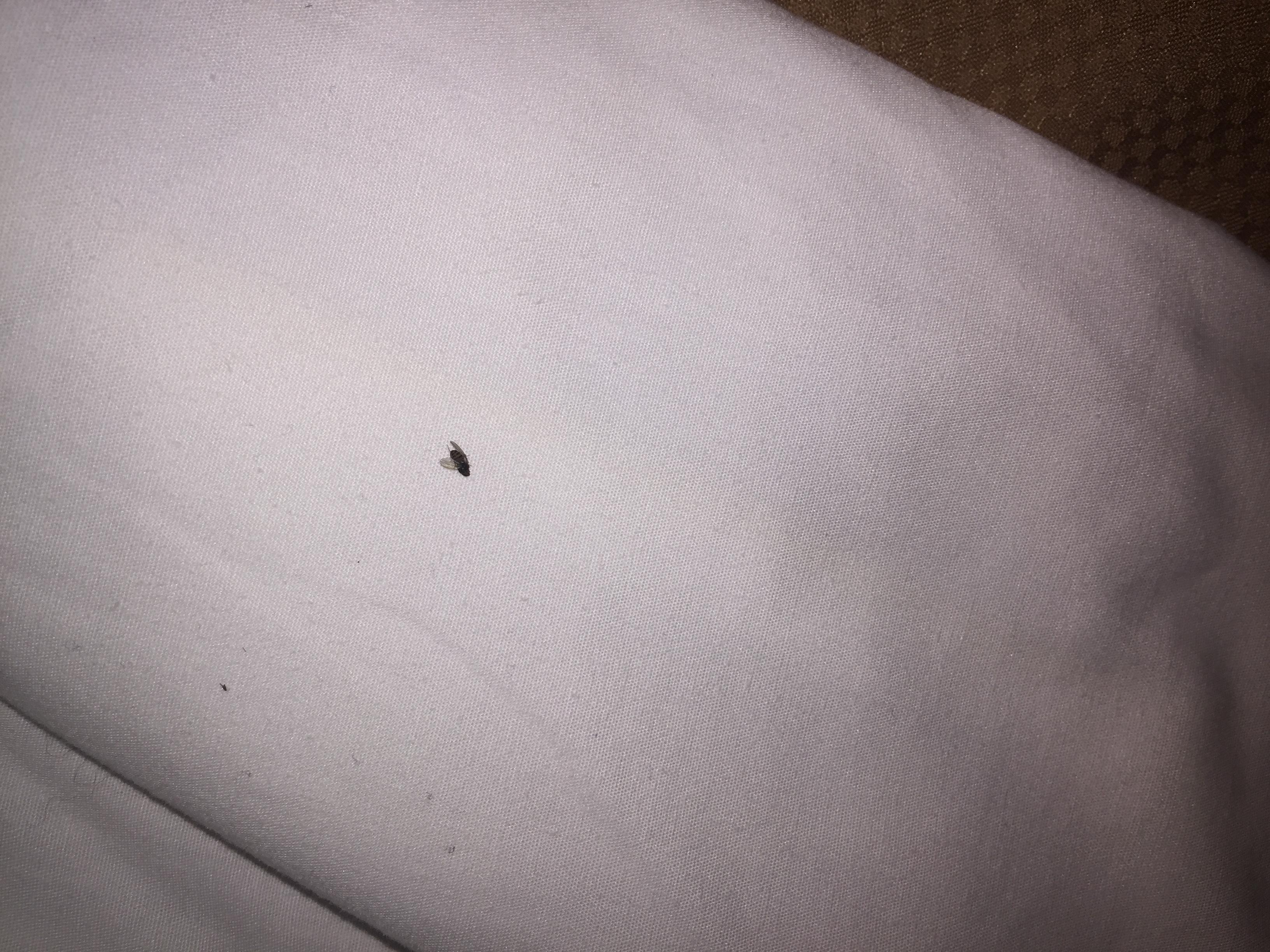 Dead Bug in the bed