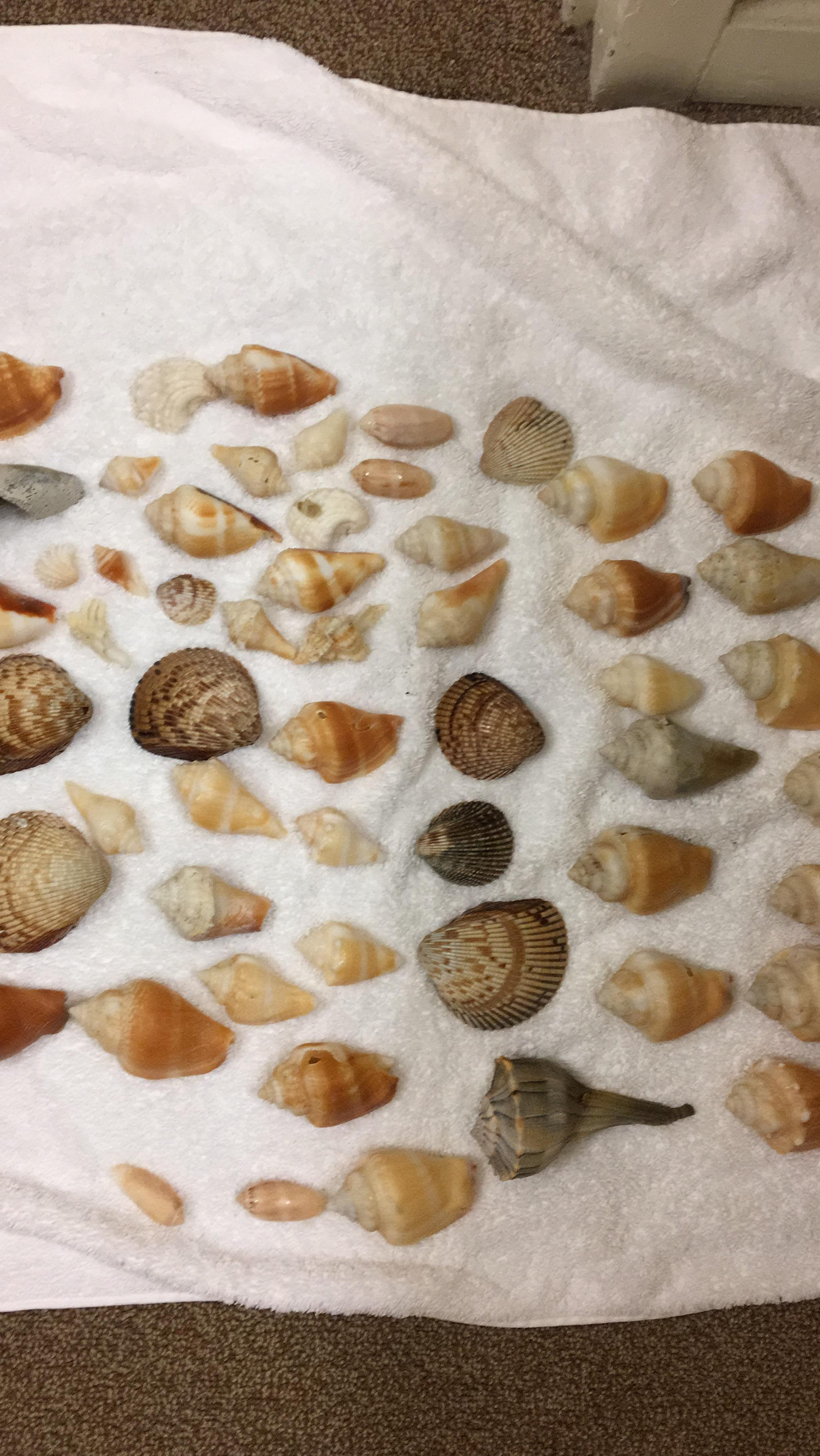 Shells we collected on an early walk