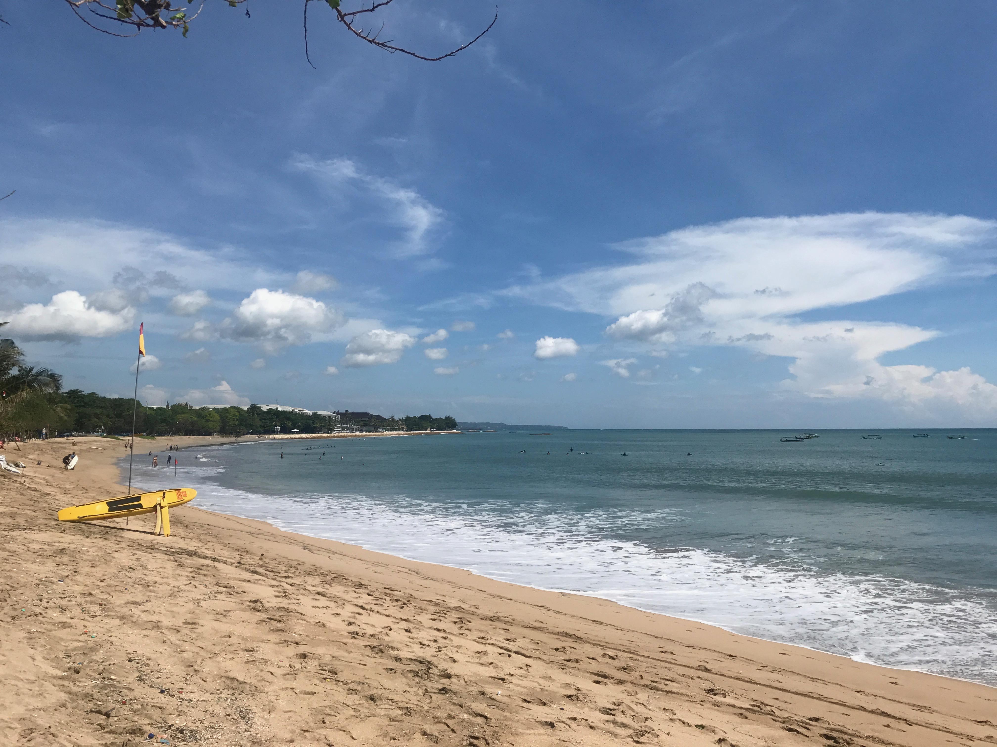 Save Bali's Sea Turtle site next to Hotel