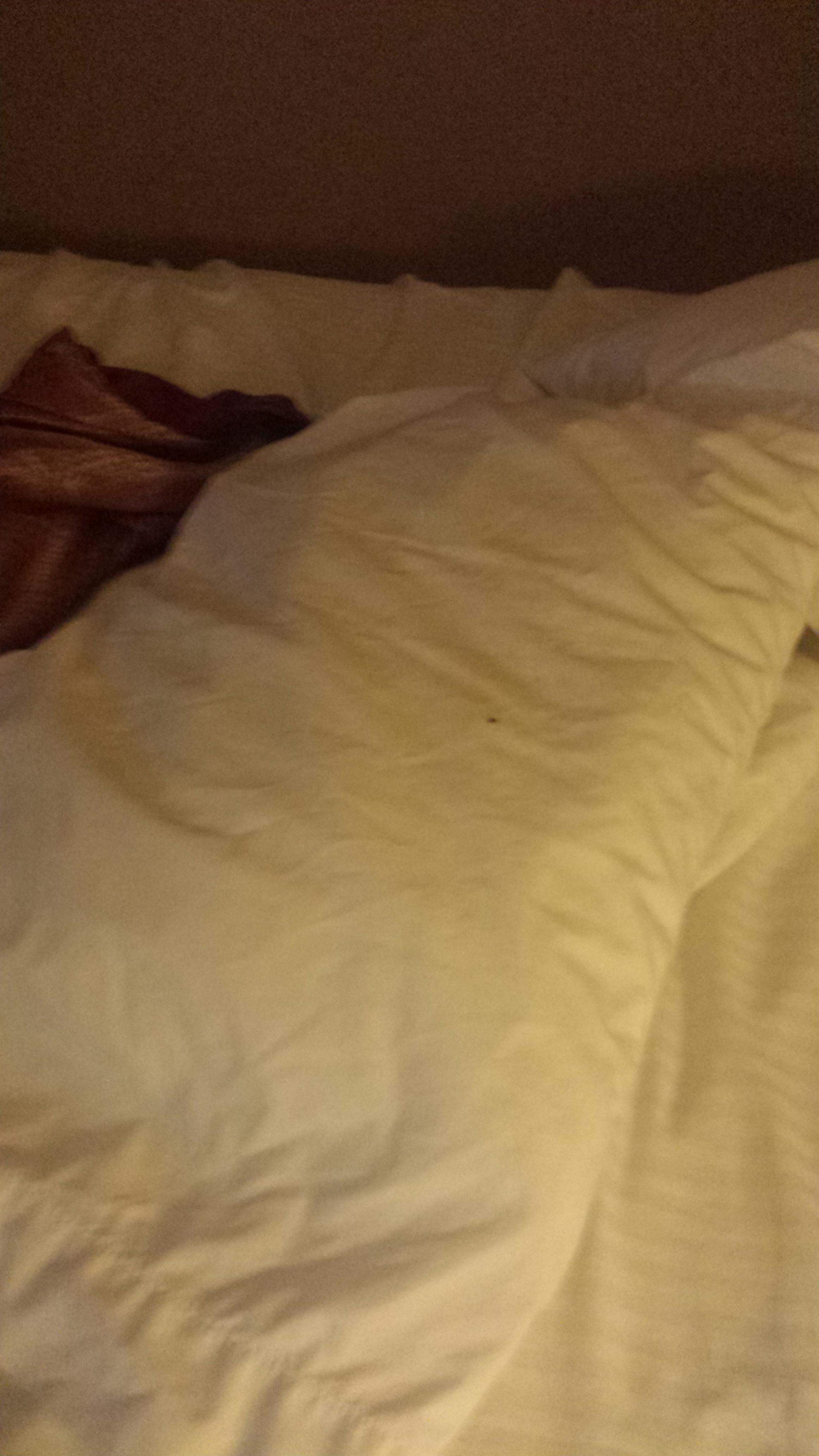 bedbug on the pillow